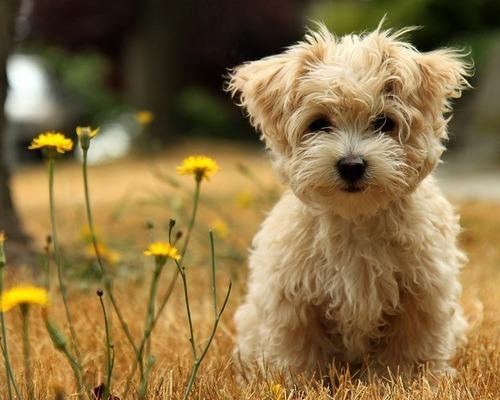 awesome, beautiful, cute, dog