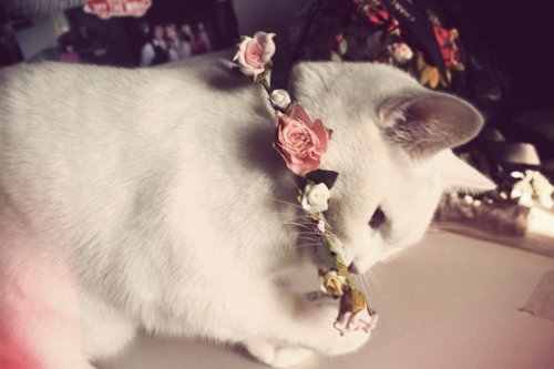 awesome, cat, cute, fashion, flower, love, lovely, pink, ribbon, rose, roses, vintage, white