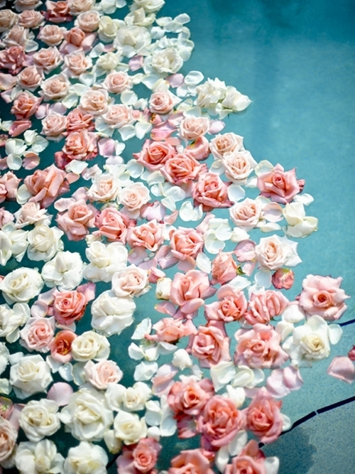 awesome, cute, photography, roses, water, whitevintage