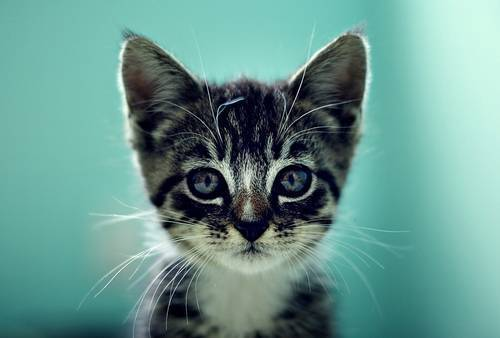 awww, cat, cute, kitten