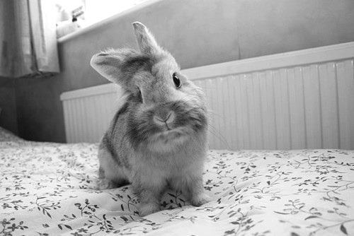 baby, beautiful, black and white, cute, photograpy, rabbit, sweet