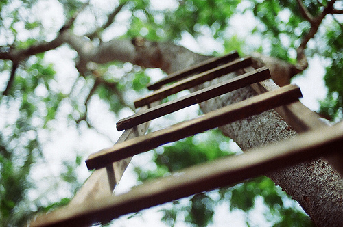 beautiful, beauty, cool, flickr, forest, hipster, indie, l-i-o-n-s, nature, photo, photography, stair, stairs, tree, tumblr, wood