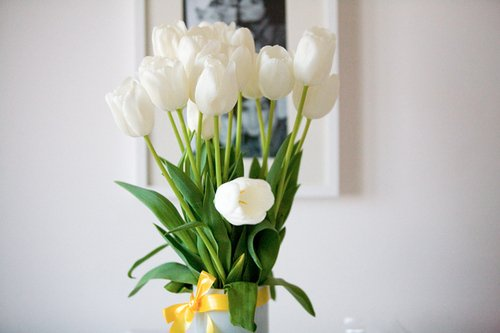 beautiful, blossom, blossoms, color, colorful, colors, floral, flower, flowers, inspiration, inspire, inspiring, photography, pretty, spring, text, tulip, tulips, white