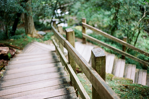 beautiful, bridge, flickr, hipster, indie, l-i-o-n-s, nature, photo, photography, tumblr, wood