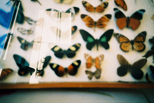 beautiful, butterflies, colors, glass, vintage