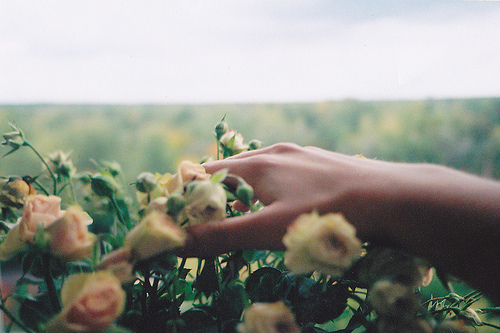 beautiful, cute, flower, flowers, garden, hand, nature, photography