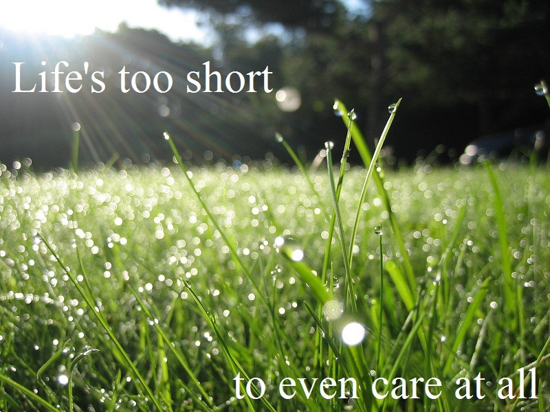 beautiful, dew, grass, life, morning, nature, pretty, quote, short, sun, text