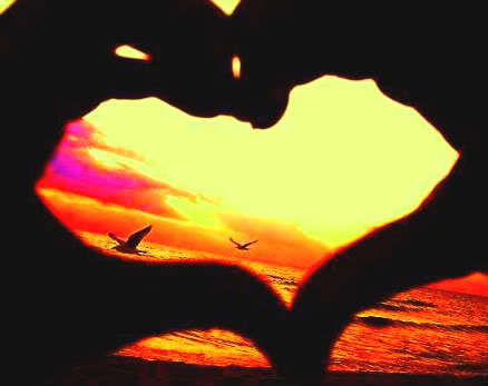 beautiful, flying free, heart, love, photography, summer, sunset