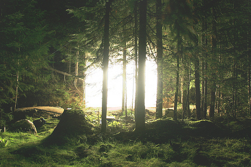 beautiful, forest, green, nature, photography, trees, woods