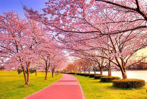 beautiful, girls, green, paradise, pink, place, spring, tree