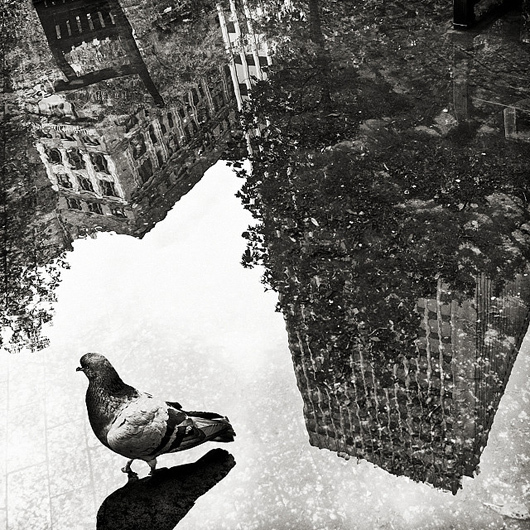 bird, birds, black and white, cities
