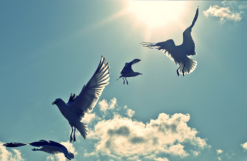 birds, clouds, photography, sky
