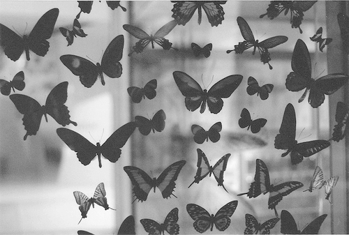 black and white, butterflies, lovely, magnificent, pretty
