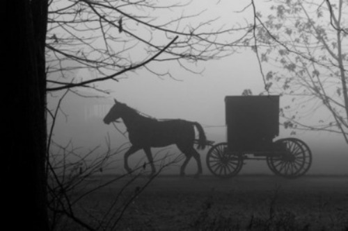 black and white, carriage, cool, fog, horse, photo, photography, vintage