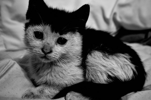 black and white, cat, cute