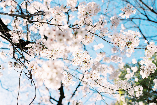 blossom, blue, nature, photography