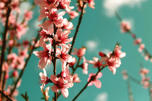 blue, flowers, nurianutella, photo, pink, w&f