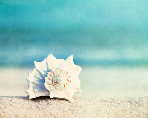 blue, ocean, sand, shell