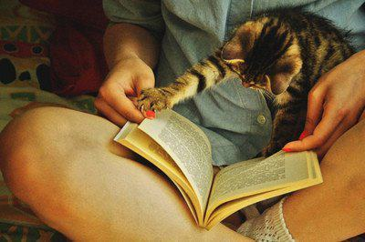 book, cat, cute, girl