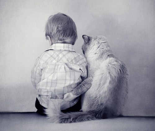 boy, cat, friends, little