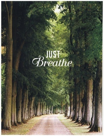 breathe, forest, text, tree