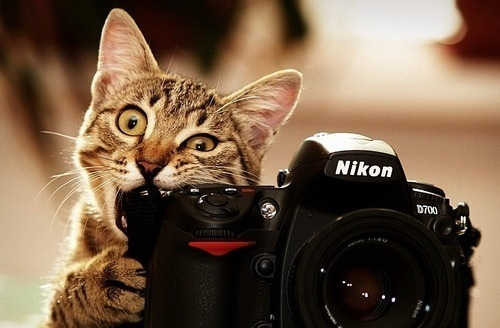 camera, cat, chewing, funny, teeth and happiness