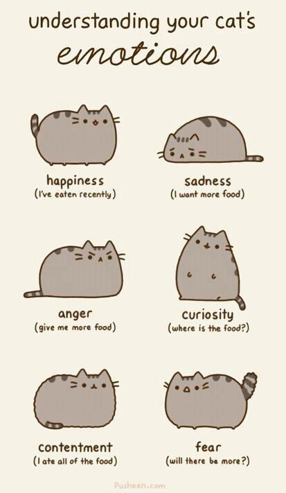 cat, cute, fat cat, food, funny, life, pusheen the cat, true