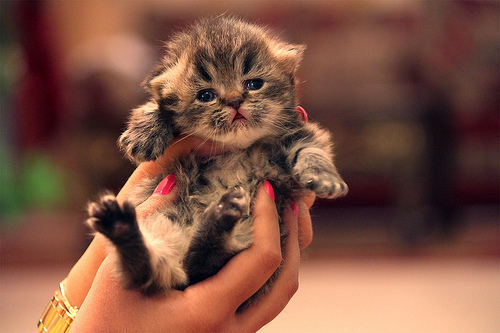 cat, cute, kawaii, kitten