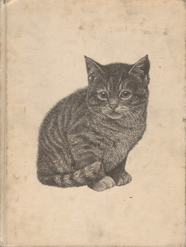 cat, gray, kitten, kitty, vintage