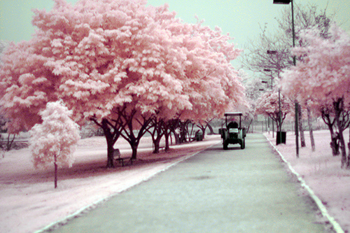 city, different, lonely, nature, park, pink, trees