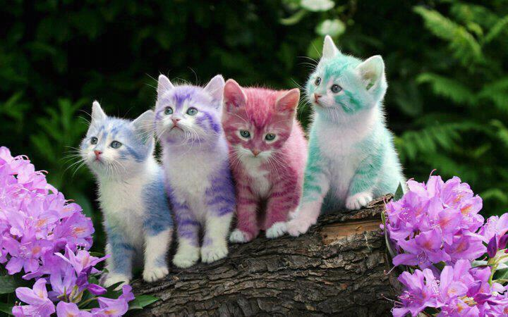 colorful, cute, kitten