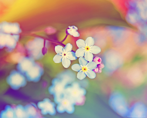colourful, flower, nature, photography, pretty, spring