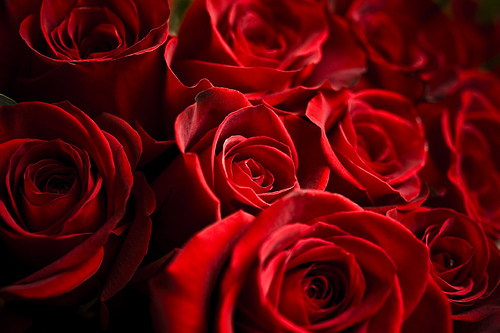 cute, flowers, love, luxury, red roses, rose, roses