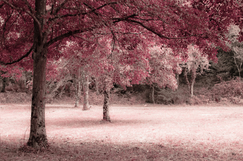 Cute Landscape Nature Photography Image 495271 On