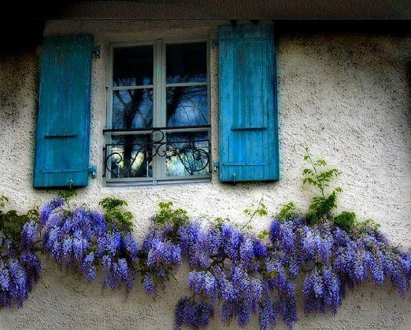 design, flowers, house, style, window