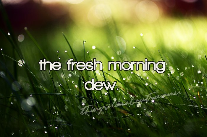 dew, morning, summer, thingsilikeaboutsummer