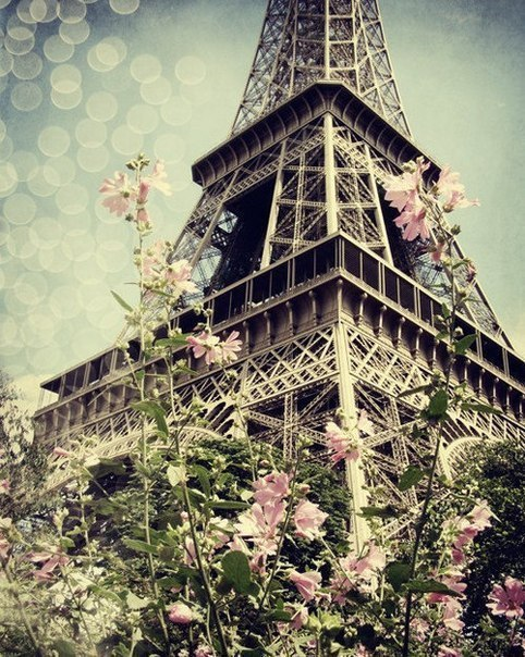 eiffel, eiffel tower, flower, france, paris, pink