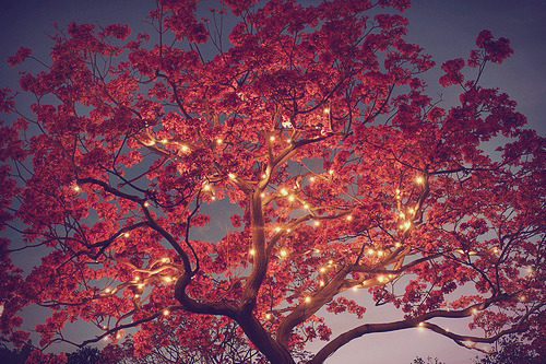 evening, lights, old, pretty, tree