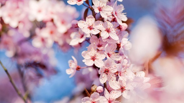 flowers, nature, photography, spring