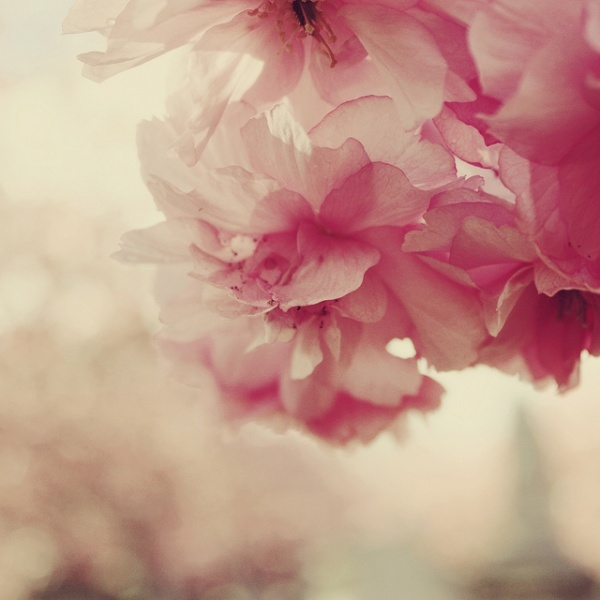 flowers, nature, pink, spring, summer
