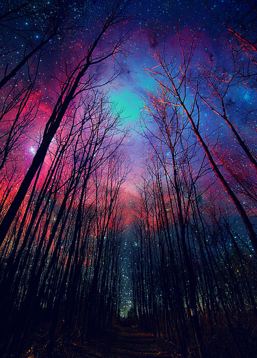 forest, galaxy, heaven, nature, night, photography, stars, trees