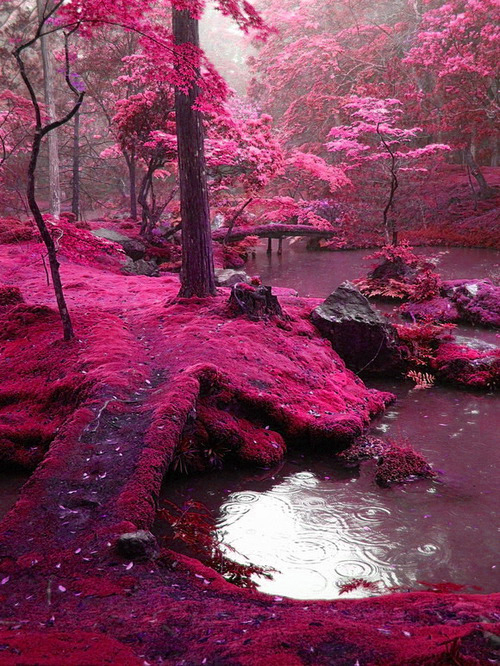 forest, photography, pink, red