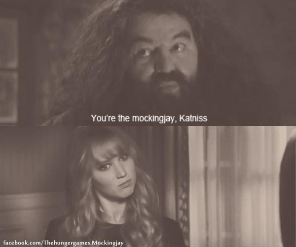 hagrid, harry potter, katniss everdeen, rubeus hagrid