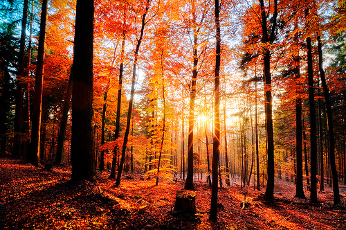 herbst, amazing, autumn, beautiful