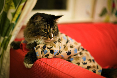 animal, beatles, boy, cat, cats, cute, dog, felinos, fofo, girl, heart, love, nightwear, omg