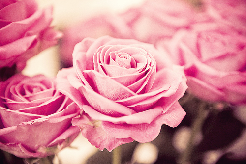 pink, roses