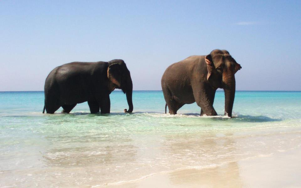 sunny, beach, elephant, elephants