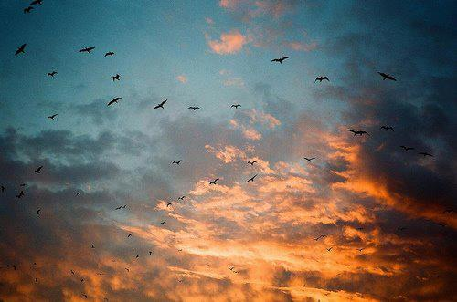 birds, clouds, orange, peacefull, pretty, sunny, sunset