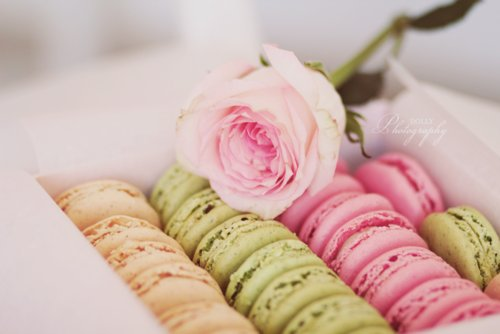 adorable, delicious, flower, food, green, love, lovely, macaron, nice, orange, pink, rose, sugar, sweet, sweetie, tasty