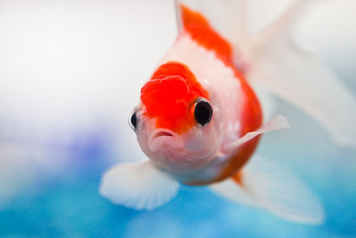 Animal Cute Fish Image 526689 On